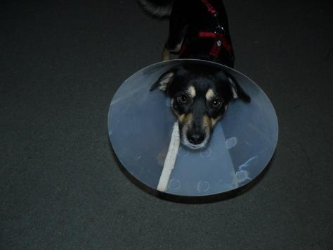 Kein Symbolbild: HuHu (Hungriger Hund)