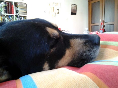 Hunde müde