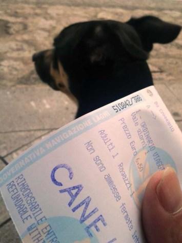 Offiziell bestätigt: Luigi ist ein Hund (und muss deshalb zahlen (lassen))