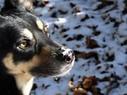 Schnee-Hund Luis