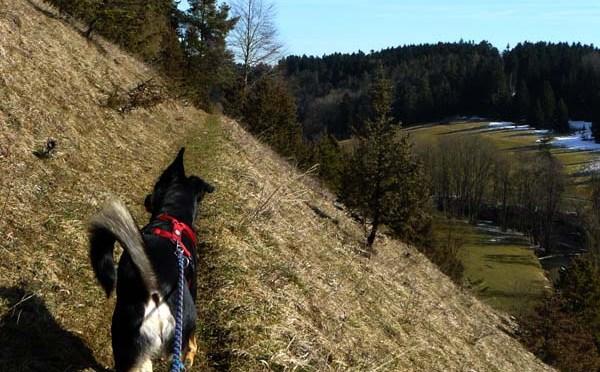 Neckarweg II: Deißlingen — Rottweil