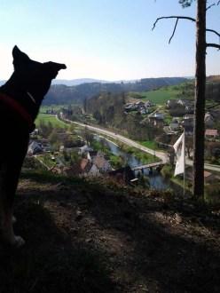 Neckarblick mit Hund (2013)