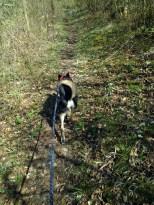 Fährtenhund Luis