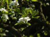 Noch mehr Blüte