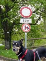 Warum Luis nach Bad Niedernau tierpsychologisch betreut werden musste