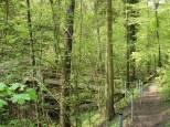 Rottenburger Dschungel