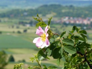 Blühender Kapellenberg