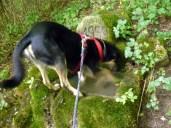 Am Brunnen vor dem Pliezhausen