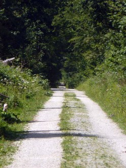 Immer noch schnurgerade Waldwege