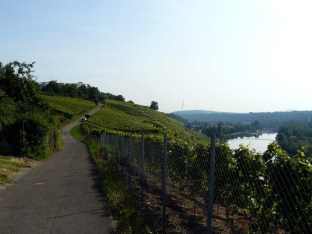 Sonne, Wein und Neckar