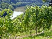 Immer noch: Sonne, Wein und Neckar