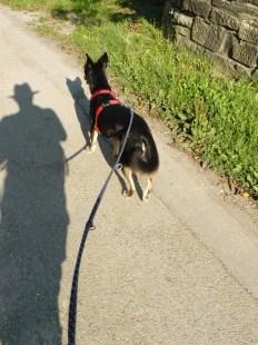 Der Hund des Schattenmannes