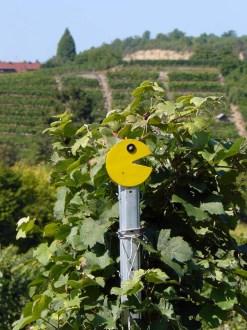Weinbauern-Smily am Wegesrand