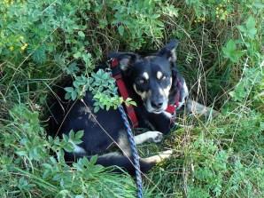 Nicht gut genug versteckt: Dieser Hund muss weiter wandern