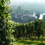 (Mutmaßliches) Stauwehr Horkheim