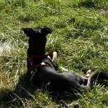 Pausenhund
