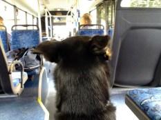 Luis macht Schienenersatzverkehr