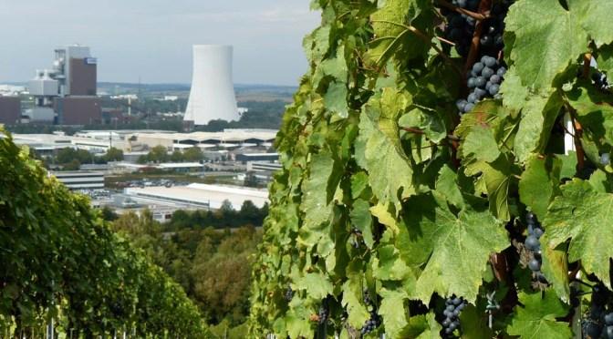 Neckarweg XV: Heilbronn — Bad Wimpfen