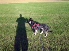 Feld, Hund und Schatten
