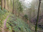 """Das ist im Odenwald ein """"alpiner"""" Wanderweg"""