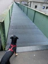 No Go für Hunde: 150 m Gitterrost
