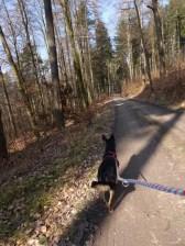 Schnellwandern auf Forstpiste