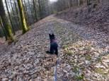 Immer noch Wanderhighway nach Neckarhausen
