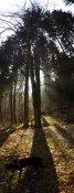 Waldige Licht- und Schattenspiele