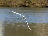 Wasservogeltestaufnahme 2