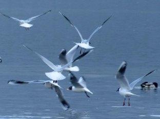 Wasservogeltestaufnahme 3