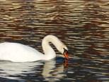 Wasservogeltestaufnahme 4