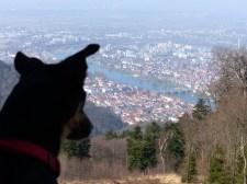 Luis freut sich auf Heidelberg
