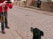 Temporäre Heidelberger Sehens- und Knips-Würdigkeit