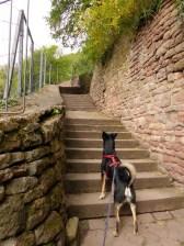 Der letzte Anstieg des Neckarwegs