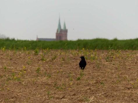 Ladenburg winkt vom Horizont