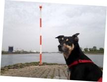 Luis am Ende (des Neckarwegs)