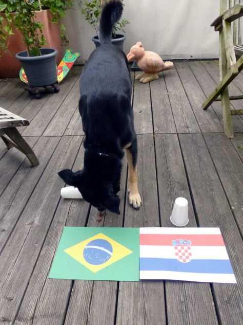 ... und entscheidet sich selbstbewusst für Brasilien!