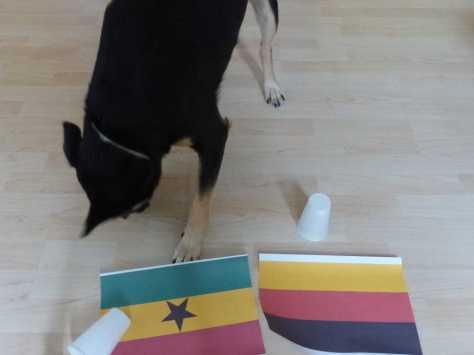 Durchgang 1: Luis entscheidet sich für Ghana