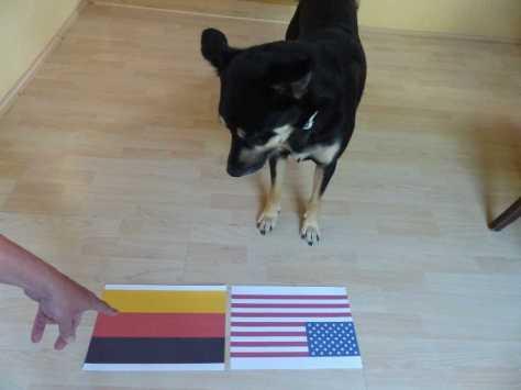 Das in Deutschland, dessen Flagge Schwarzwurst, Rote Wurst und Käsebrote symbolisiert.