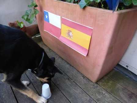 Versuchsaufbau 1: Luis entscheidet sich für Spanien