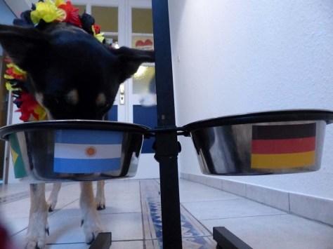 ... in dem er ein fettes argentinisches Rindersteak vermutet ...