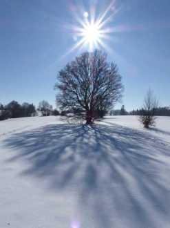 Hoernle_im_Winter_11