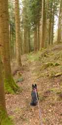 Abstieg nach Alpirsbach