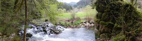 Naturdenkmal an der Kinzig