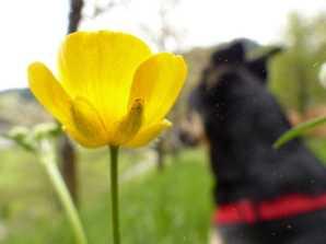 Frühling treibt Blüten