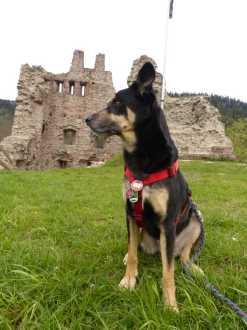 Schenkenburg-Burghund