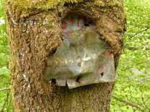 Baum frisst Schild