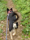 Luis wandert fröhlich nach Gutach