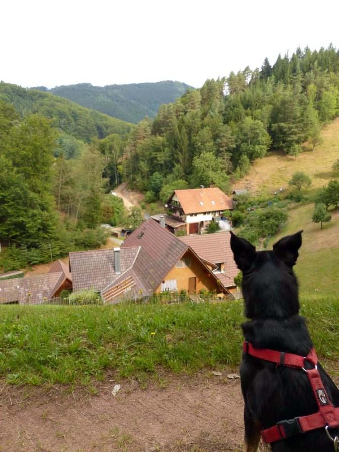 Ba[h]lingen-Tour V: Jakobsweg Wolfach — Elzach