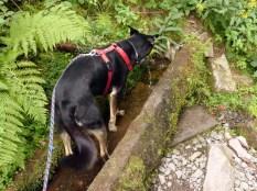 Erfrischung im Brunnen -- zur inneren und äußeren Anwendung